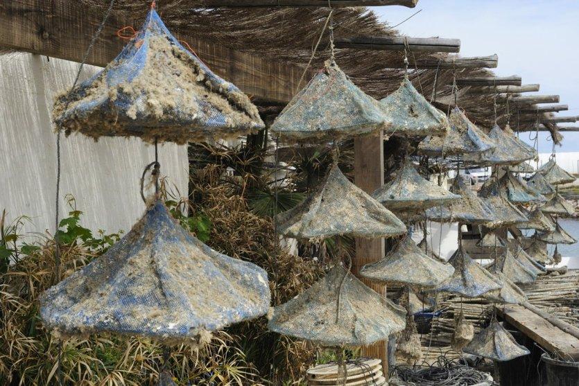 Cabanes à huîtres de Leucate - © D.R.