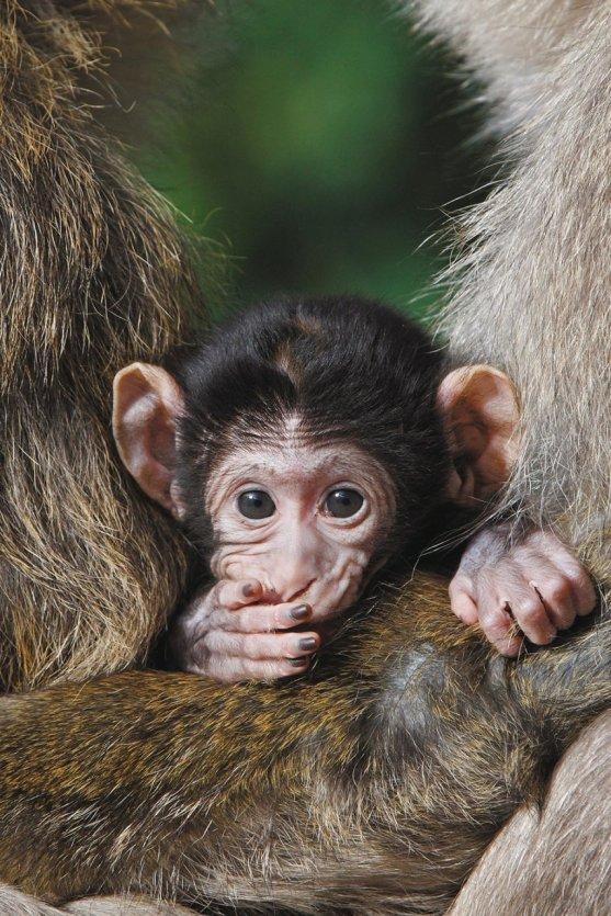 - © Montagne des singes
