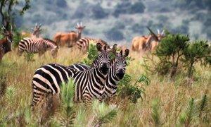 Parc National de l'Akagera.