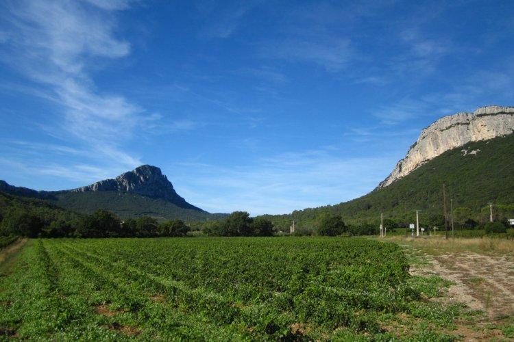 - © Carine Ageneau- Montpellier Wine Tours