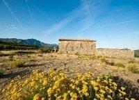 Les herbes du maquis - © Office de tourisme de Calvi