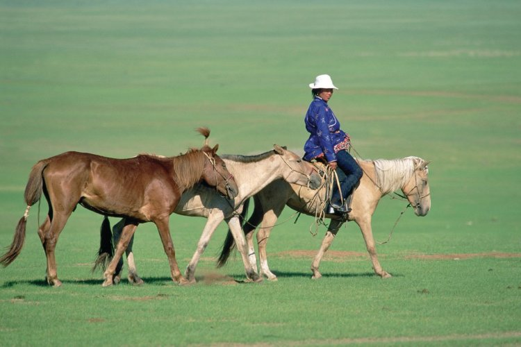 Cavaliers mongol menant ses chevaux, Aimag de Khentiy. - © Eric Martin - Iconotec