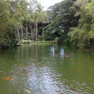 Jardin Botanique Parcs Et Jardins Deshaies 97126