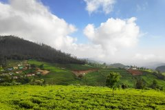 (© Kishore0712 - Shutterstock.com)