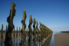Bouchots en baie de Jersey. (© Alan_Lagadu - iStockphoto)