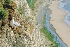 Le site des Deux Caps abrite deux cent cinquante espèces d'oiseaux (© Olivier LECLERCQ)