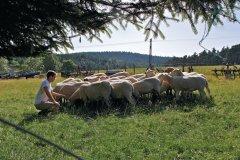 L'élevage sert dans la préparation des plats de viande issus de la gastronomie ligérienne (© Michel DIEUDONNE)