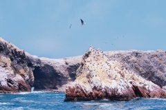 Les îles Ballestas. (© Author's Image)