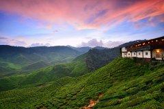 Plantation de thé des Cameron Highlands. (© Fiz_zero / Shutterstock.com)