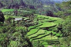 Jatiluwih, village situé à proximité du mont Batukau. (© Author's Image)