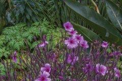 Composition florale parc de Monserrate. (© Ludovic COSTE)