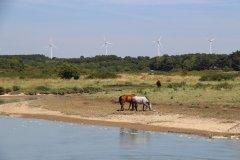 chevaux et éoliennes. (© Linda CASTAGNIE)