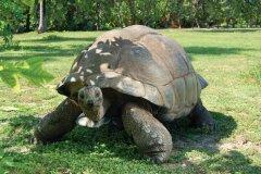 Tortue géante. (© Gerard Larose - Office du tourisme des Seychelles)