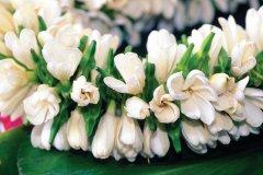 Pour confectionner des couronnes et colliers, la fleur de Tiaré est la favorite (© Sylvain GRANDADAM)