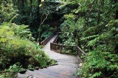Chemin menant aux chutes du Carbet. (© iStockphoto.com/stevegeer)