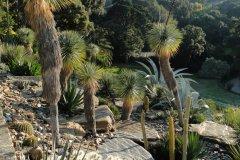 Jardin d'Amérique aride, Domaine du Rayol. (© Domaine du Rayol)