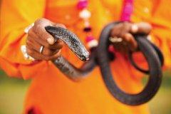 Cobra du Rajasthan. (© Bravobravo - iStockphoto)