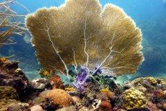 Les fonds-marins de la réserve Cousteau. (© Gregory CEDENOT - Fotolia)