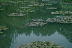 Jardins de Claude Monet, Giverny - Le Jardin d'Eau (© Stéphan SZEREMETA)