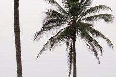 Plage de Ouidah. (© Pascal Mannaerts - www.parcheminsdailleurs.com)