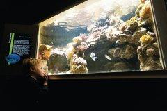 Le Musée-Aquarium de Nancy (© Stéphane Belin)
