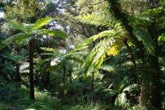 Jardin de Nouvelle-Zélande, fougères arborescentes, Domaine du Rayol. (© Domaine du Rayol)
