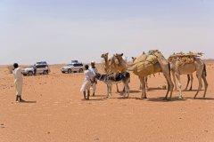 Caravane de bédouins dans le Sahara oriental. (© Tom Pepeira - Iconotec)