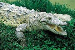 Crocodile d'Amerique, lac Enriquillo à Barahona. (© Ministère du Tourisme de la République Dominicaine)