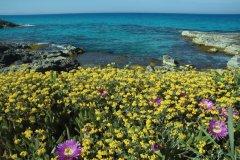 Es Caló (Formentera). (© Conselleria de Turisme de Formentera - Jorge Jimenez)