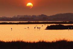 Coucher de soleil sur un étang dans les environs de La Grande-Motte. (© Frédéric de Bailliencourt)