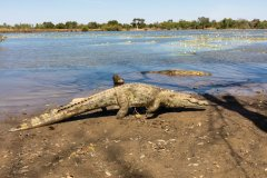 Mare aux crocodiles sacrés. (© Ssviluppo)