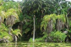 L'île d'Akagwa sur le lac aux oiseaux (Rwihinda). (© Julia GASQUET)