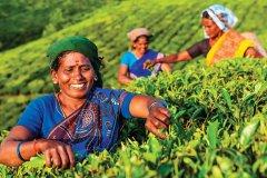 Récolte de thé, Munnar. (© Bartosz Hadyniak / GO Vision / GraphicObsession)