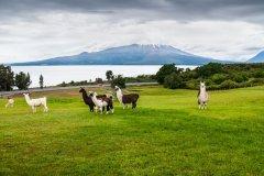 Osorno. (© Byvalet / Shutterstock.com)