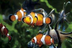 Grand aquarium de Saint-Malo. (© Raphaël Auvray)