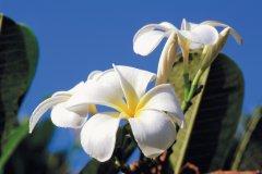 Des fleurs plus exotiques les unes que les autres. (© Author's Image)