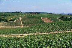 Vignoble de Chablis. (© AM stock nature)