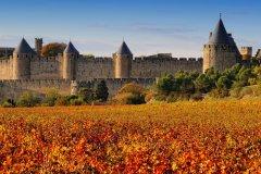 La cité de Carcassonne et son vignoble. (© Pat on stock - Fotolia)