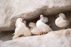 Réserve de vie sauvage d'Al Areen. (© Vinod V Chandran / Shutterstock.com)