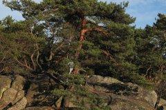 La forêt de Fontainebleau (© Razvan - iStockphoto.com)