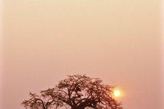 Baobab du parc national de Kissama, dans la province de Luanda. (© Tropicalpixsingapore - iStockphoto)