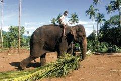 Orphelinat des éléphants (© Eric Martin - Iconotec)