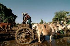 Collecte d'eau. (© Author's Image)