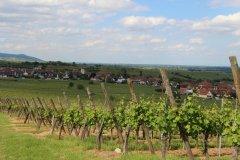 Vue sur le village de Mittelwihr dans le vignoble de Bennwihr. (© Marine PREISS)