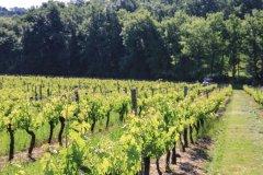 Vignes de Cocumont. (© CDT 47)