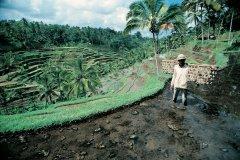 Rizière près d'Ubud. (© Yukiko Yamanote - Iconotec)