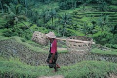 Paysan dans les rizières près d'Ubud. (© Yukiko Yamanote - Iconotec)