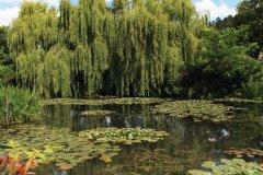 Le bassin des Nymphéas de Giverny (© Tom Prokop - Fotolia)