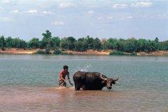 Jeune laotien et son boeuf profitant de la chaleur du Mékong. (© Author's Image)