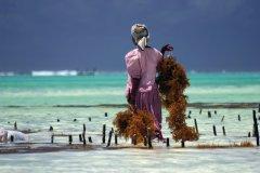 Zanzibar (© Johannes Stupp - Fotolia)